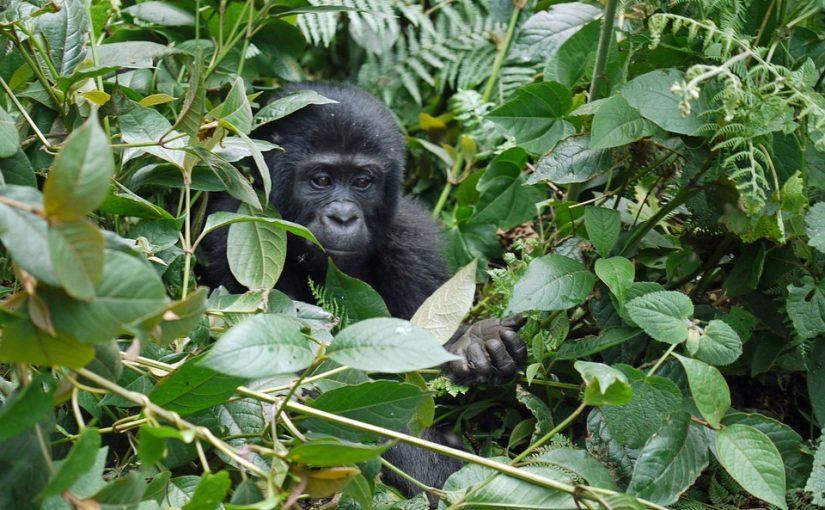 travel blog, travel, safaris, African