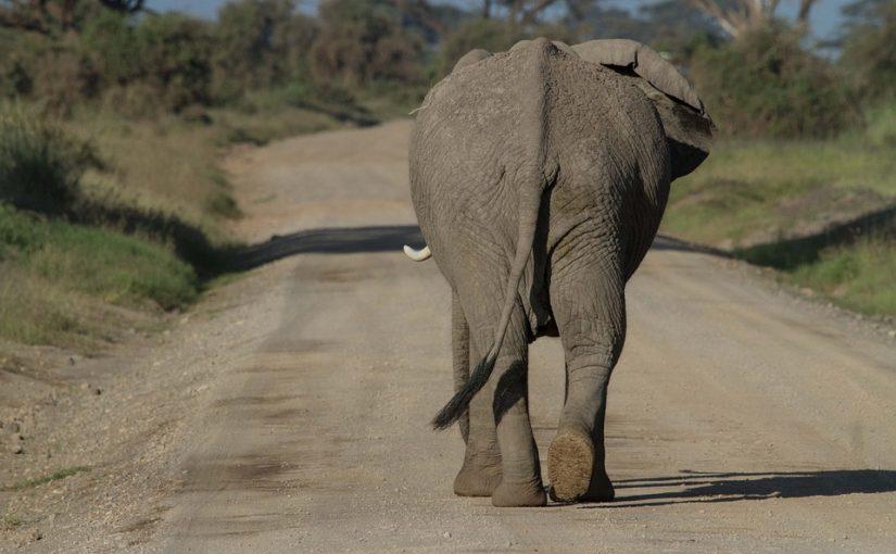 Kenya Safari Holiday in Aberdare National Park