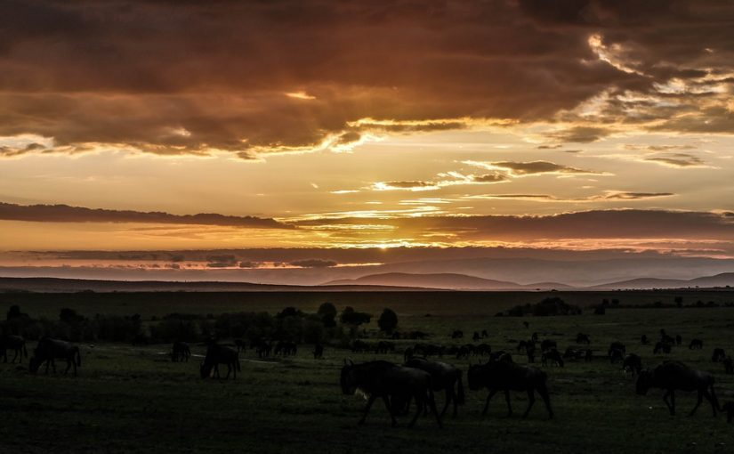 THE MASAI MARA NATIONAL PARK